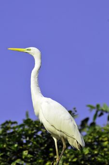 Free Heron Stock Photography - 8065402