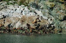 Free Sea Lions On Rocks Stock Photo - 8065420