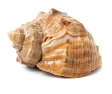 Free Old Sea Shell Isolated Stock Photography - 8067622