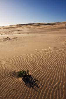 Free Beautiful Desert Landscape Stock Photos - 8068013