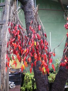 Chillies Royalty Free Stock Images