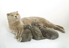 Free Small Kittens And Mother-cat Royalty Free Stock Photography - 8069007