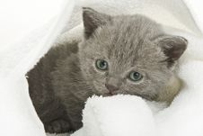 Free Kitten Over White Stock Images - 8069134