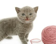 Free Kitten Over White Royalty Free Stock Images - 8069139