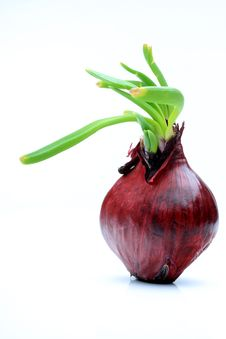 Free Red Onion Stock Photography - 8069262