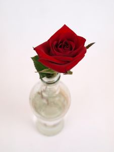 Free Red Rose Bottle 2 Royalty Free Stock Image - 8069406