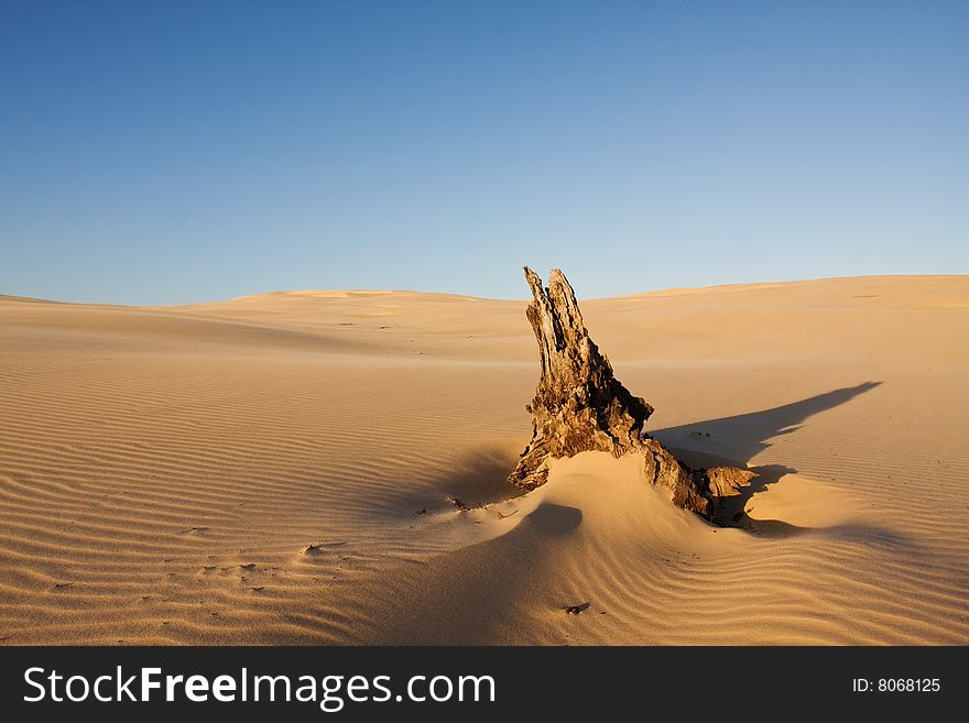 Beautiful Desert Landscape With The Dead Tree Log - Free Stock
