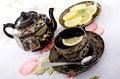 Free Cup Of Tea Stock Photos - 8072913