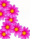 Free Flowers Decorative Royalty Free Stock Photography - 8074097