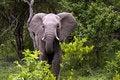 Free Young Elephant Stock Photo - 8074240