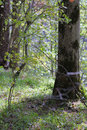 Free Summer Forest. Stock Images - 8074794
