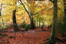 Autumn Woods Stock Photography