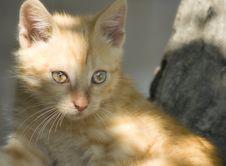 Free Red Kitten Stock Image - 8072741