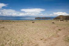 Free Isla Del Sol - Titicaca Royalty Free Stock Image - 8073686