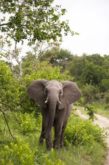 Free Young Elephant Stock Photography - 8074162