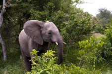 Free Young Elephant Stock Photos - 8074263