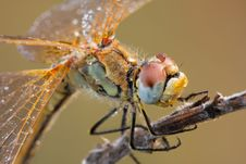Free The Dragonfly Macro Portrait Stock Photo - 8074380