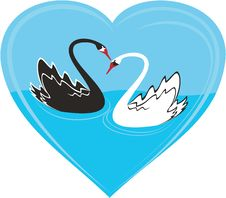 Free Couple Of Swans Royalty Free Stock Photos - 8076088