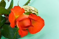Red Roses And Golden Jewel Case Royalty Free Stock Images