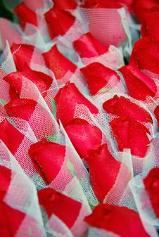 An Array Of Red Roses Stock Image