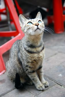 Cat Looking Up Royalty Free Stock Photography