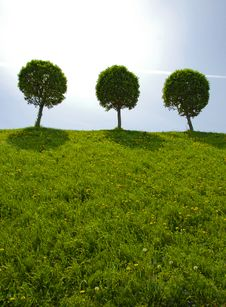 Free Three Round Tree On Hill Stock Photos - 8079983
