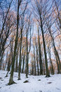 Free Winter Forest Stock Photo - 8080250