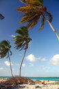 Free Palms On The Beach Stock Photos - 8083093