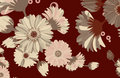 Free Autumn Daisy Stock Photography - 8084282