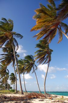 Free Palms On The Beach Royalty Free Stock Photos - 8083048