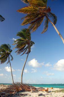 Palms On The Beach Stock Photos