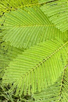 Free Fern Royalty Free Stock Images - 8083119