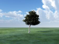 Free Tree In Green Landscape Royalty Free Stock Photography - 8083417