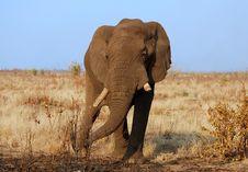 Free Africa Stock Image - 8083501