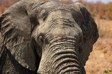 Free Elephant Close Up Stock Photography - 8083522