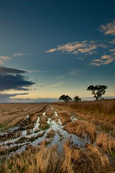 Free Portuguese Ricefield Stock Photos - 8084213