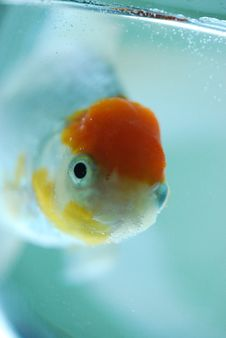 Free Fish Royalty Free Stock Photography - 8084357