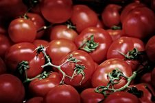 Free Fresh Tomatoes Stock Images - 8086504
