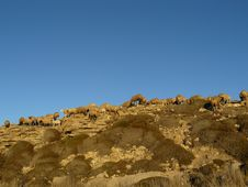 Free Sheeps On A Cliff Stock Photography - 8087222