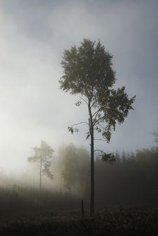 Free Tree A Misty Morning Royalty Free Stock Images - 8087469
