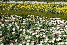 Free Field Of Flowers Royalty Free Stock Image - 8087526