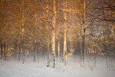 Free Filtered Trees Stock Images - 8088204