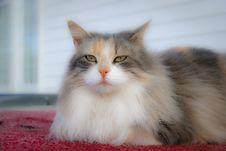 Free Cat Stock Photos - 8088843