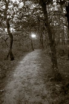 Free Path Through The Woods Royalty Free Stock Photography - 8088987