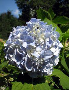 Free Blue Flowers Stock Photos - 8088993