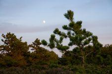 Free Moon Through The Trees Stock Photo - 8089290