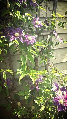 Free Purple Flowers Stock Image - 80821961