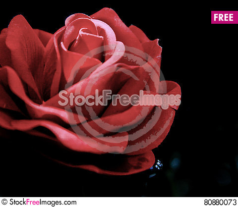 Free Bright Sun Shining Through Single Red Rose- Black Background Stock Photos - 80880073