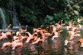 Free Flamingos Stock Photos - 8091163