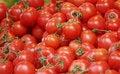 Free Fresh Tomatoes Stock Photography - 8097552